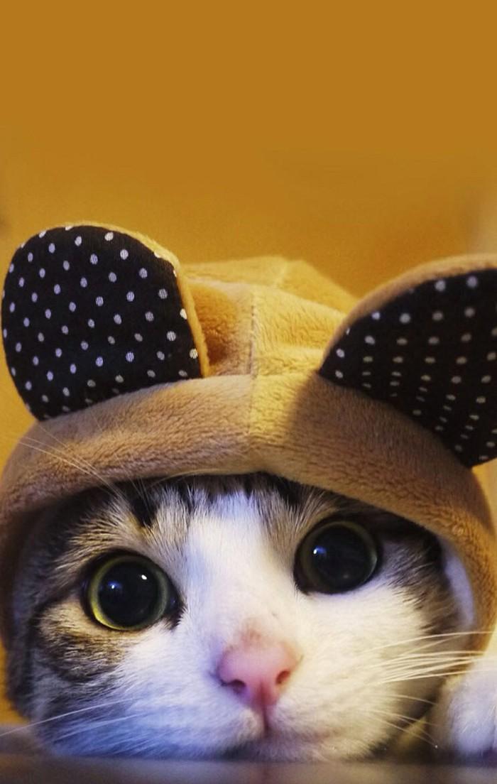 可爱的喵星人图片 我是你的小喵喵