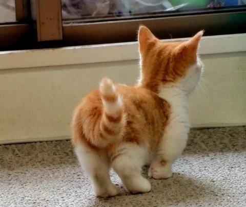 可爱猫咪-何必怀念 - 图片素材