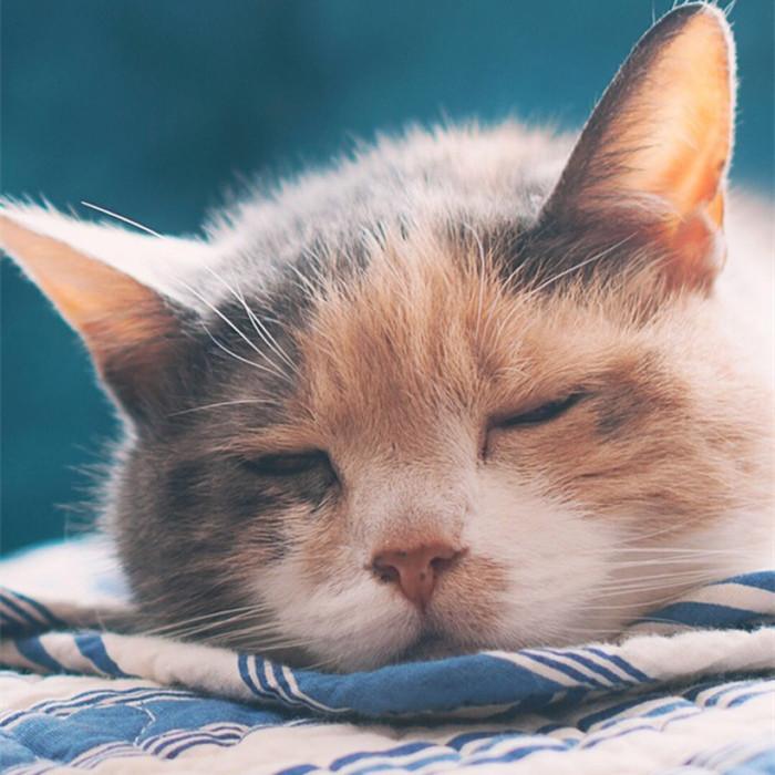可爱猫咪 微信头像